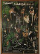 especes de lémuriens