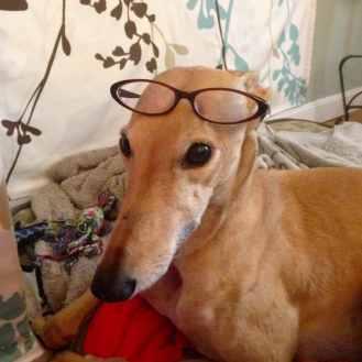 FrugalHound glasses
