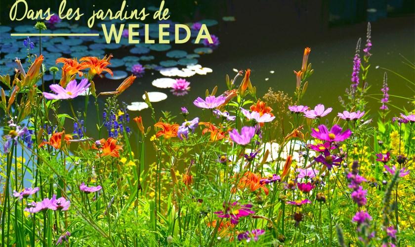weleda-1
