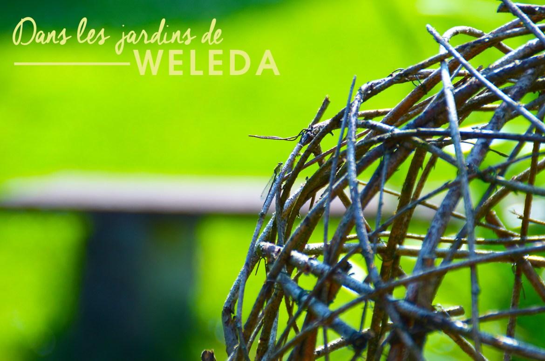 weleda-2