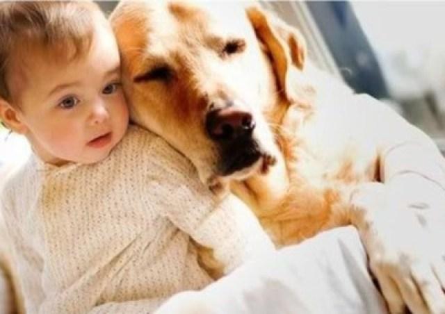 Παιδί και άσθμα; Πάρτε σκύλο!