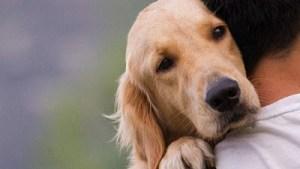 Β. Αποστόλου: Αποσύρεται το ν/σ για τα ζώα συντροφιάς