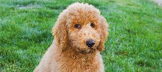 Σκύλος, σπίτι και καθαριότητα: Πώς θα πετύχετε αυτόν τον συνδυασμό