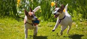 Σκύλος και άνοιξη: Τι θα πρέπει να προσέχουμε