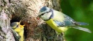Έχουν και τα πουλιά συντακτικό στη γλώσσα τους!
