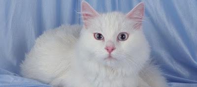 Η γάτα σας μαδάει – Τι πρέπει να κάνετε;