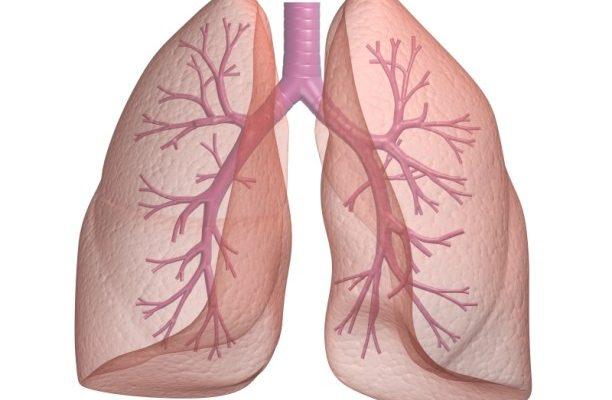 Καταπολέμηση της Βρογχίτιδας και της συμφόρησης του αναπνευστικού με βότανα.