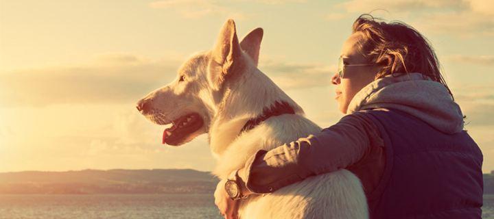 Οι ιδιοκτήτες σκύλων έχουν μικρότερη πιθανότητα να πεθάνουν πρόωρα από καρδιαγγειακό ή άλλο αίτιο, σύμφωνα με μια νέα σουηδική επιστημονική μελέτη.