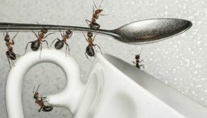 Oι πιο Αποτελεσματικοί Τρόποι για να Κρατήσετε τα Μυρμήγκια Μακριά από το Σπίτι σας
