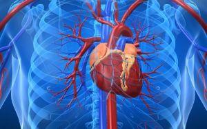 Read more about the article Οι τροφές που «καθαρίζουν» τις αρτηρίες – Διατροφή για την καρδιά