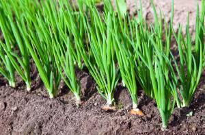 Τι λαχανικά να φυτέψω το Νοέμβριο
