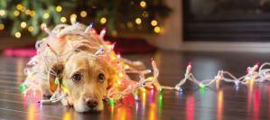 Read more about the article Πώς να αντιμετωπίσετε τη μελαγχολία των γιορτών