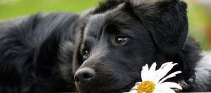 Read more about the article Τελικά τα σκυλιά έχουν αχρωματοψία;