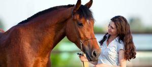 Και τα άλογα μπορούν να επικοινωνήσουν με τον άνθρωπο!