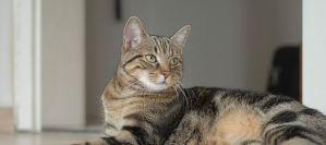 Πώς θα καταφέρεις να δώσεις στη γάτα σου ένα χάπι;
