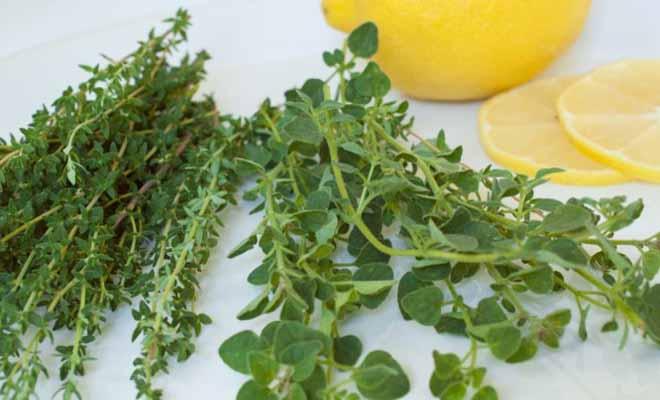Ποιο ελληνικό βότανο προστατεύει από υπέρταση και καρκίνο του παχέος εντέρου;