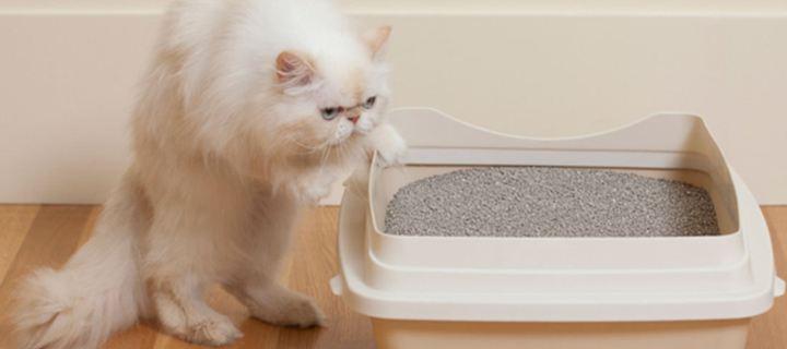 Read more about the article 6 λόγοι που η γάτα σου δεν πηγαίνει στην άμμο για την ανάγκη της