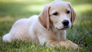 Read more about the article Τα καρότα είναι η τέλεια λιχουδιά για τους σκύλους σας