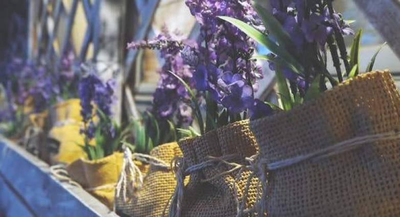 Αυτά τα δύο φυτά θα σας κάνουν να αισθανθείτε καλύτερα – Διώχνουν το άγχος
