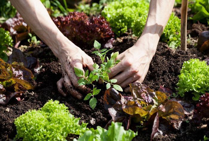 Κηπουρική: Η καλύτερη Ψυχοθεραπεία