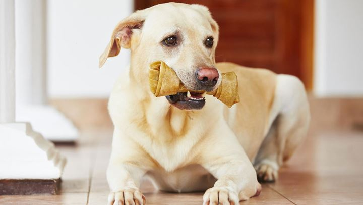 Read more about the article Γιατί δεν πρέπει να ταΐζετε με κόκκαλα το σκυλάκι σας