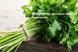 Read more about the article Μαϊντανός: Από ποιες παθήσεις προστατεύει το αγαπημένο μυρωδικό