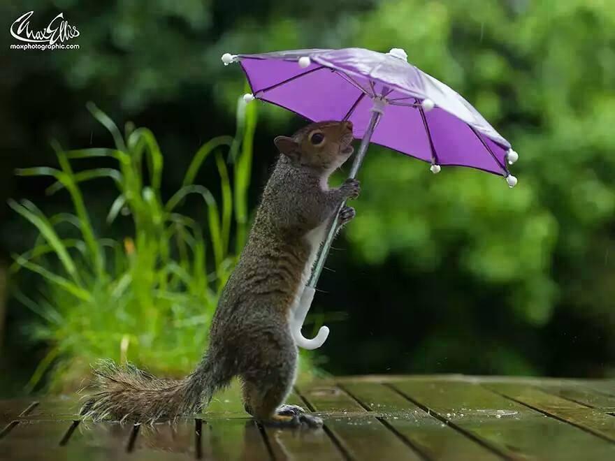dieren in de regen 1