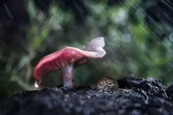 dieren in de regen 10