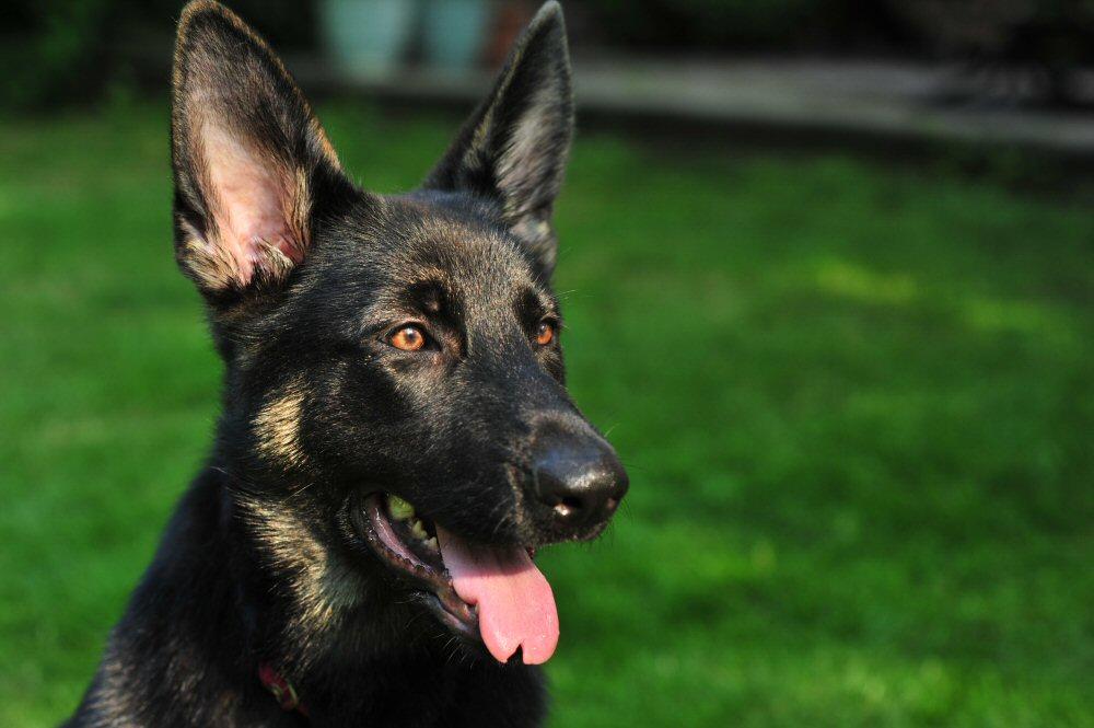 Dog Photographer in Delaware