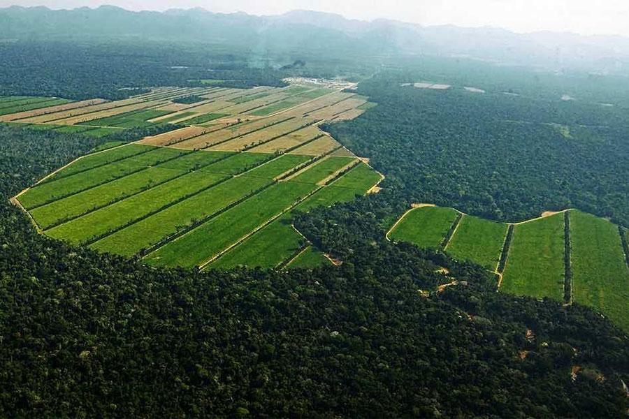Deforestación amenaza a indígenas de la Amazonia boliviana