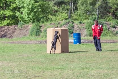 DRK Rettungshundestaffel Havelland