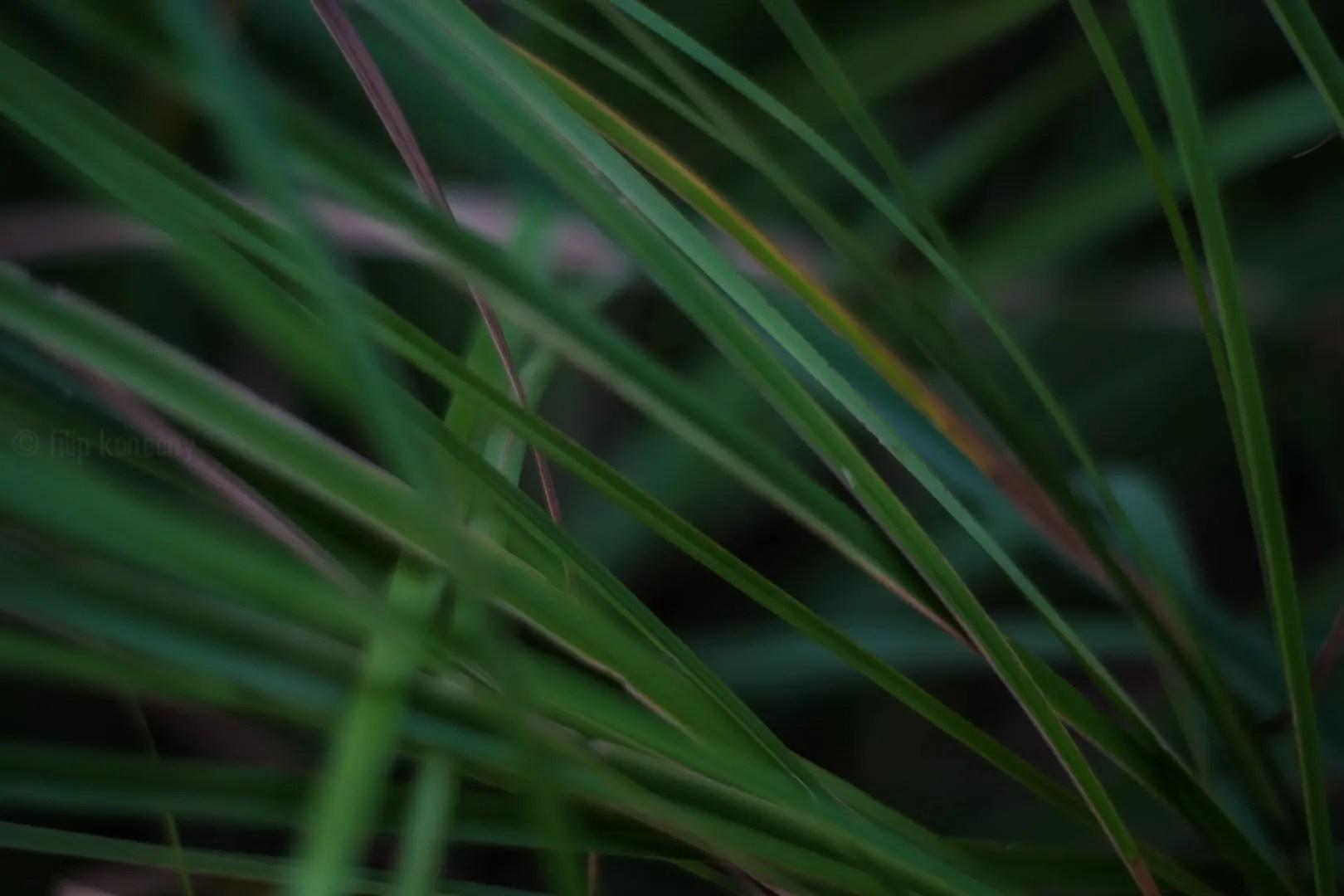 blades of grass close up