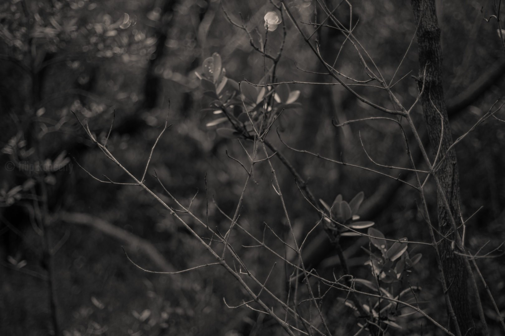 black and white photo of florida woods