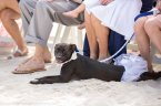 cute black dog on the beach