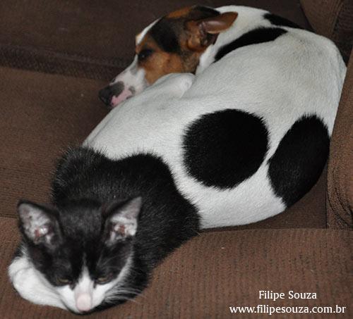 Como cão e gato