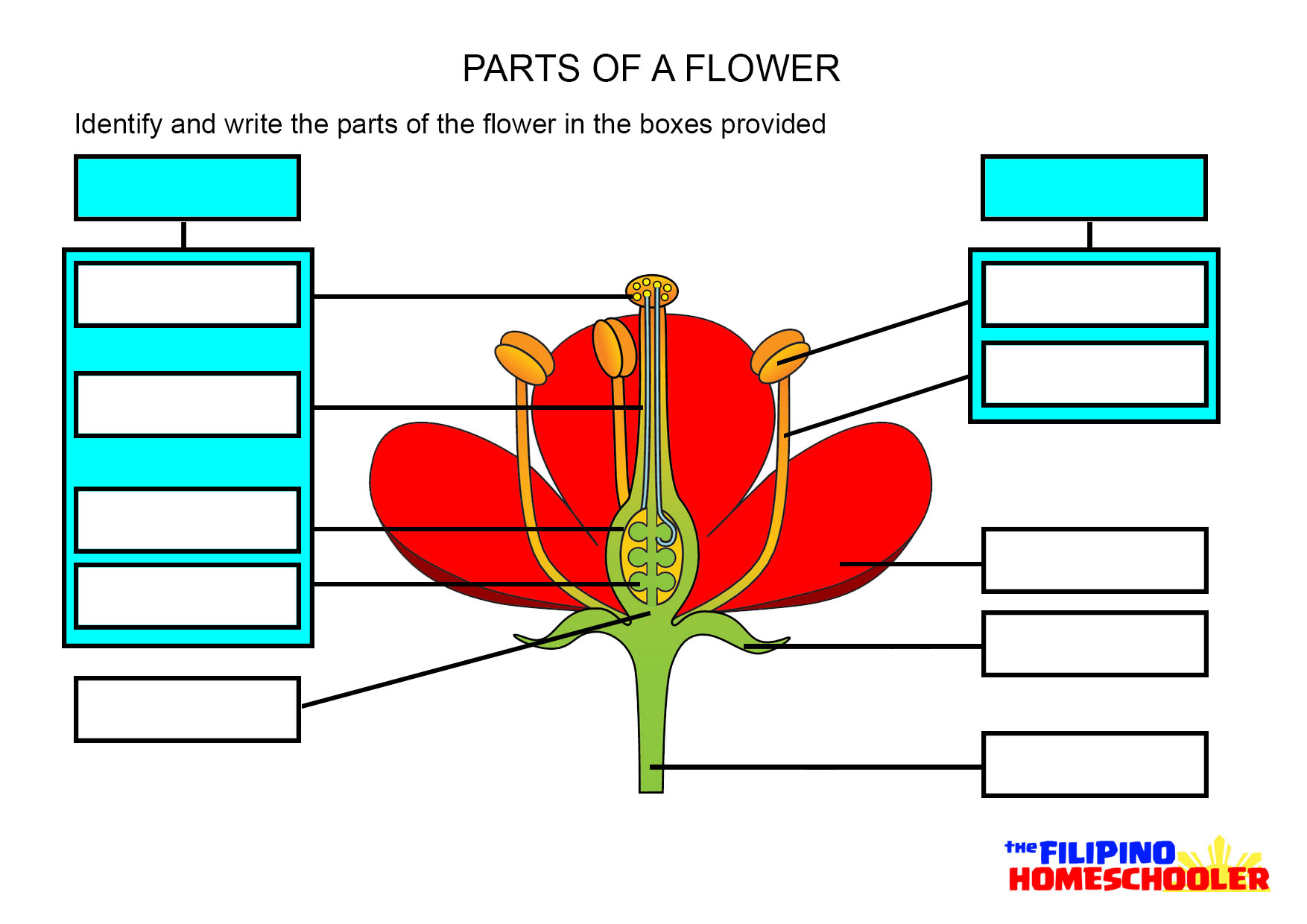 35 Parts Of A Plant Label Worksheet