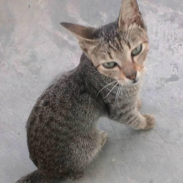 death of pet cat