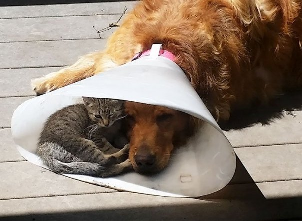 Nice To Have A Buddy When You're Down And Out