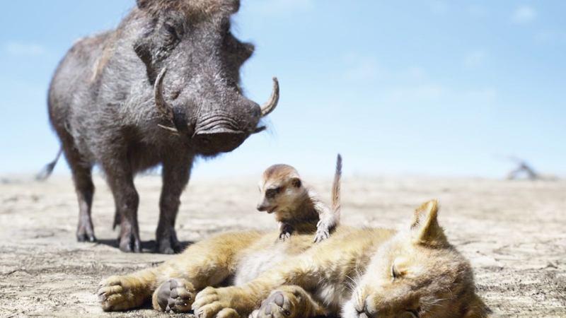 Кадр из мультфильма «Король лев»
