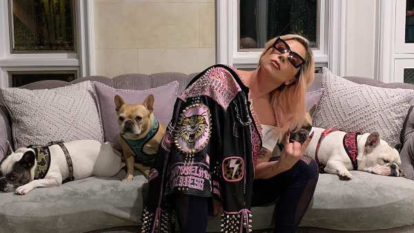 Lady Gaga Offers A 0,000 Reward After Her Dog Walker Was Shot & Two Frenchies Were Stolen