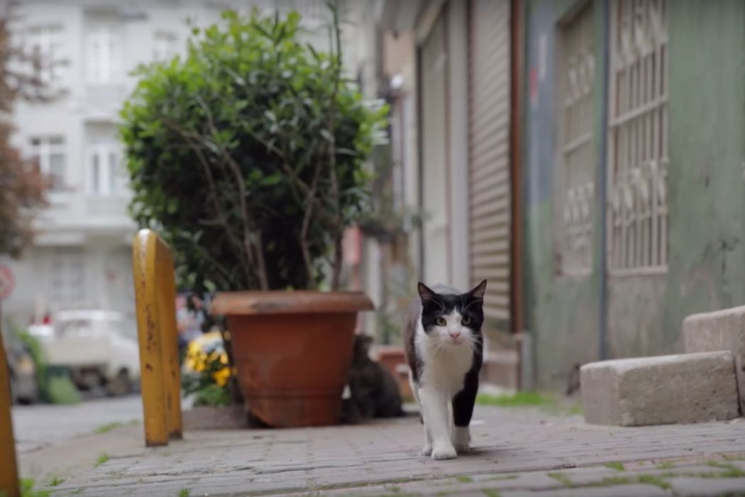 KEDI: The Film We All Need