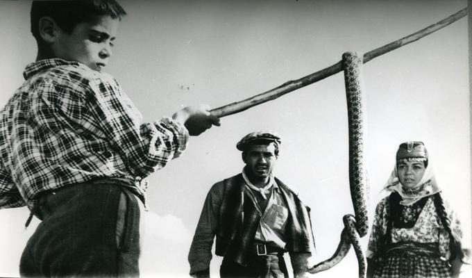 yılanların öcü - filmloverss