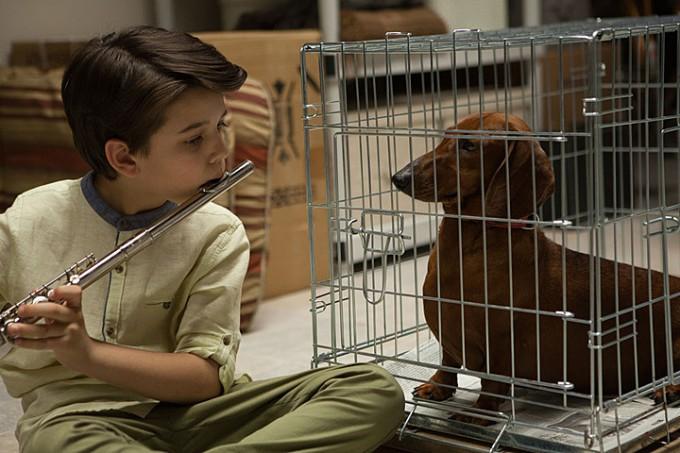 wiener-dog-filmloverss