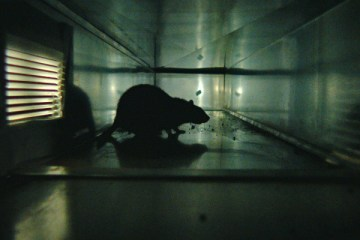 rats-filmloverss