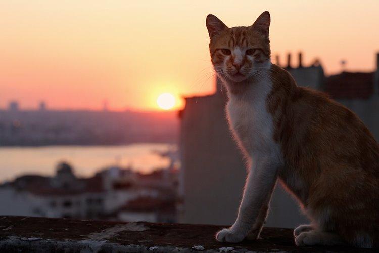 kedi-filmloverss