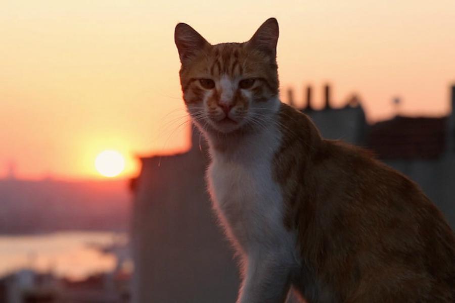 Time'a Göre Yılın En İyi Filmleri Belli Oldu, Listede Kedi de Var!
