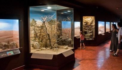 Εκπαιδευτικές δραστηριότητες για σχολικές ομάδες στο Μουσείο Φυσικής Ιστορίας Κρήτης