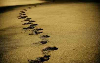 Απελπισίας βήματα