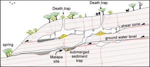 Malapa cave, where other human fossils accumulated through death traps