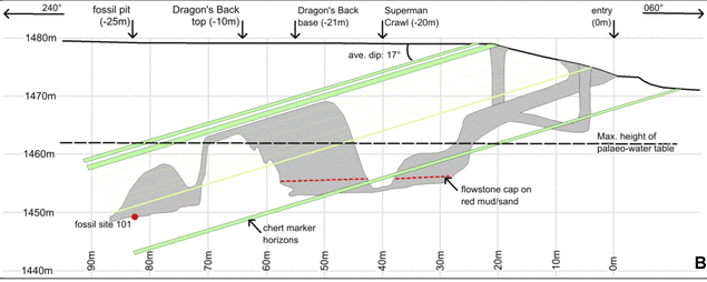 A cross section of Rising Star Cave, where Homo naledi was found